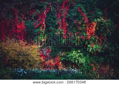 Lush foliage with colorful fall leaves in the park. Natural seasonal background.