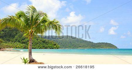 Once palm on the beach