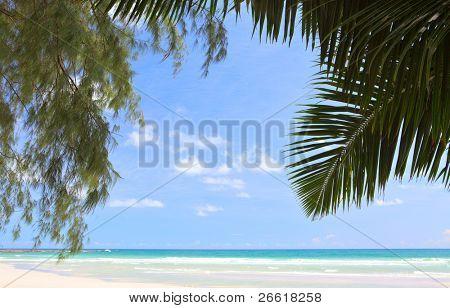 Palm and fir awning over beach