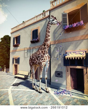 Giraffe eats flowers from the window of the house second floor. Photo & media mixed concept.