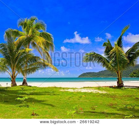 Baby grass area under palm tree in family hotel on the tropical beach, remote island, sky background