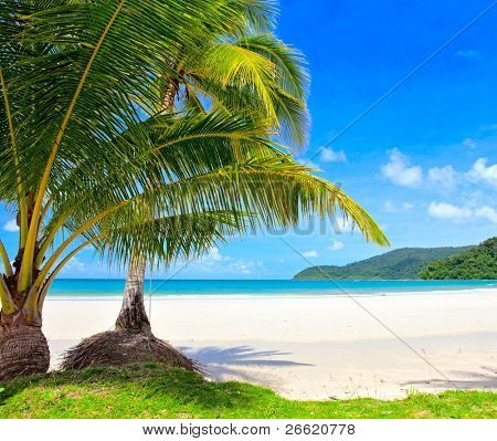 Summer nature view. Beach trees,white sand, sea and grass under blue sky