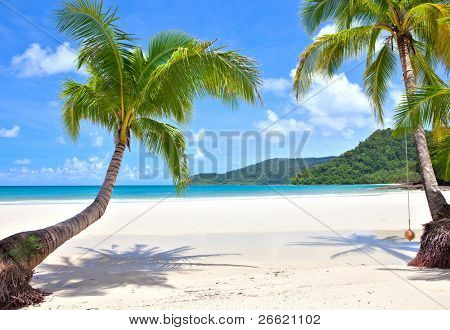 Palm trees on empty sunny beach