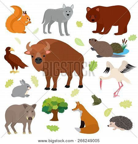 Animal Vector Animalistic Character In Forest Squirrel Wolf Bear Hare Of Wildlife Illustration Set O