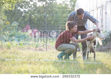 Two farmers, husband and wife tending to their goat on their farm poster