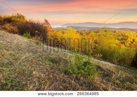 Autumn Sunrise In Mountains. Weathered Grass And Trees In Fall Foliage. Valley Of Fog And Mountain R