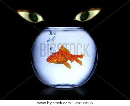 Cats eyes watching fish