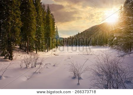 Winter Forest In Mountains At Sunset In Evening Light. Tall Spruce Trees Around The Snow Covered Mea