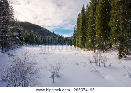 Winter Forest In Mountains. Tall Spruce Trees Around The Snow Covered Meadow