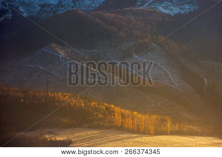 Forest In Golden Foliage And Morning Mist. Wonderful Autumn Nature Background