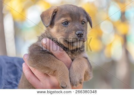 The Puppy On The Hands Of Men. A Shelter For Animals. The Adoption Of A Puppy. Dog Games