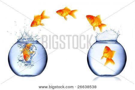 Golden fish jumping from aquarium