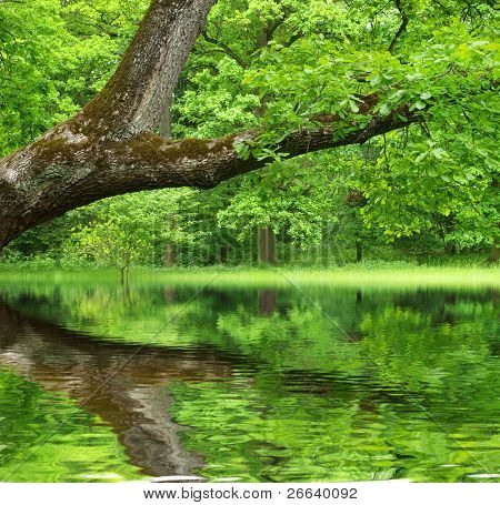 Oak tree reflected in water