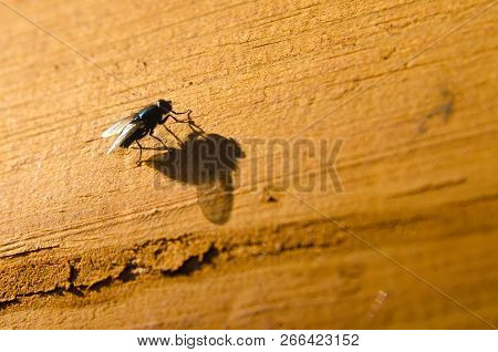 A Fly Sitting On A Wooden Background