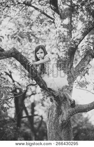 Activity, Little Girl Climb Tree In Summer Garden. Activity, Active Childhood, Lifestyle
