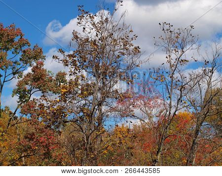 Scenic View On A Fall Day. It Also Gives A Good Look At The Long Slender Beans Of The Catalpa Tree T