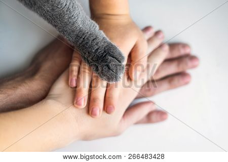 The Hands Of The Family And The Furry Paw Of The Cat As A Team. Fighting For Animal Rights, Helping