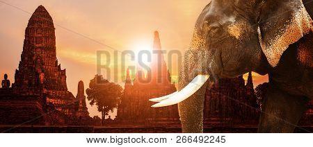 Ivory Elephant And Ayuthaya Ancient Pagoda With Sunset Sky Background