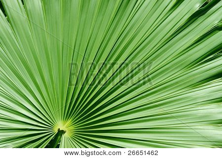 Palm tree closeup