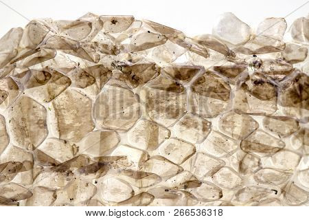 Dry skin of snake on white background, macro photo. Snake skin closeup with backlight. Reptile scale pattern. Molting snake. Natural skin texture. Reptile scale surface. Animal skin peel. poster