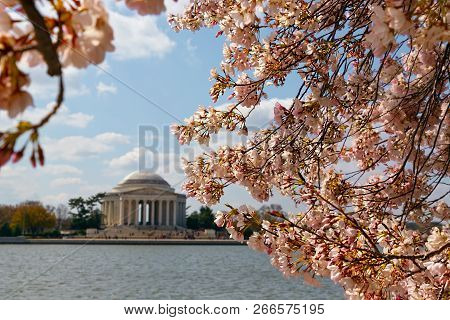 Cherry Blossoms On The Tidal Basin In Washington, Dc.