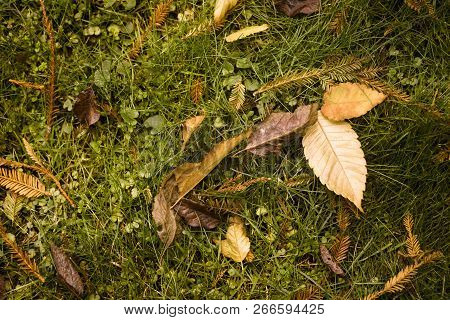 Assortment Of Fall Leaves On A Grassy Meadow