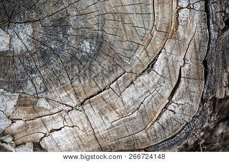 Stump Of Old Tree Felled - Section Of The Trunk With Annual Rings. Texture Of Tree Stump.