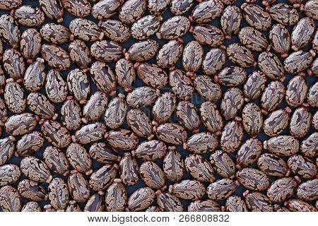 Seeds Of Castor Bean (ricinus Communis) - Background