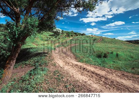 Summer Landscape With Rural Road Going Uphill And Old Tree On A Field On Sunny Day