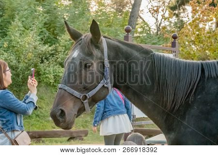Nonsan, South Korea; October 14, 2018:closeup Profile Of Horse Wearing A Bridle Standing In Front Of