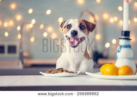 Dog eating food at home. Happy pet santa