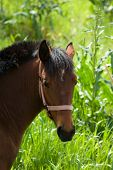 headshot for horse on background blurred lush vegetation poster