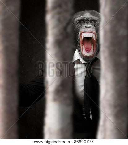 Annoyed Monkey Behind Bars, Indoor