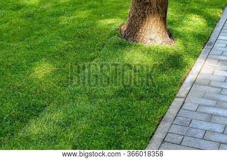 Straigh Line Of New Freshly Installed Green Rolled Lawn Grass Carpet Along Stone Pavement Sidewalk A