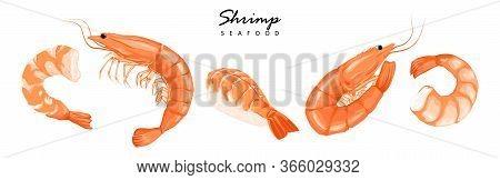 Shrimps, Shrimps Without Shell, Shrimp Meat. Shrimp Prawn Icons Set. Boiled Shrimp Drawing On A Whit