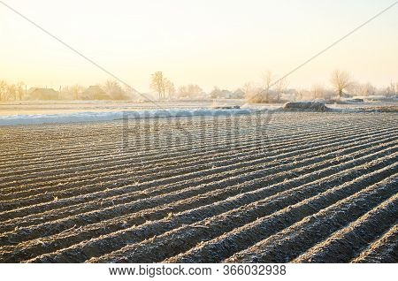 Winter Farm Field Ready For New Planting Season. Preparatory Agricultural Work For Spring. Choosing