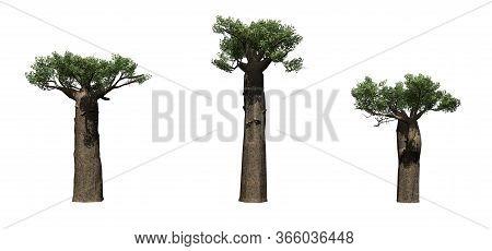 Set Of Madagascan Baobab Trees - Isolated On White Background - 3d Illustration