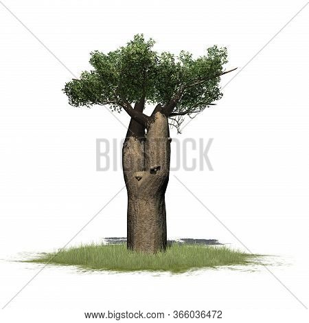Madagascan Baobab Tree On A Green Area - Isolated On White Background - 3d Illustration