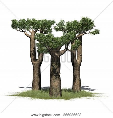 A Little Group Of Madagascan Baobab Trees On A Grass Area - Isolated On White Background - 3d Illust