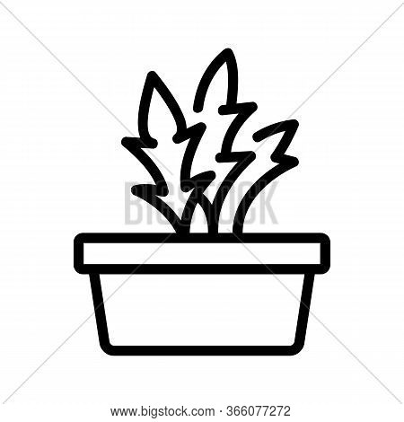 Home Grown Arugula Icon Vector. Home Grown Arugula Sign. Isolated Contour Symbol Illustration