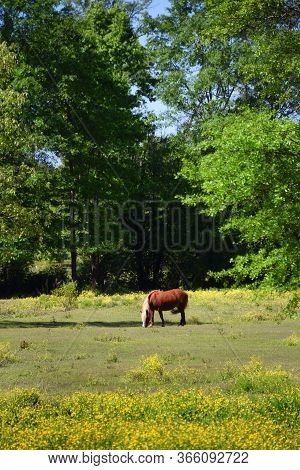 Pony In The Field Of Green Grass