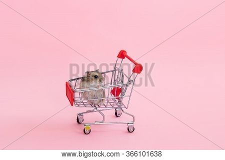 Asian Hamster Runs Away And Sits In A Shopping Cart. Funny Pet Is Having Fun. On A Pink Background.