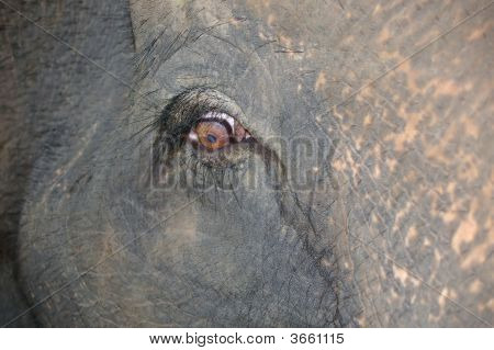 sad looking asian elephant in a rehabilitation centre poster