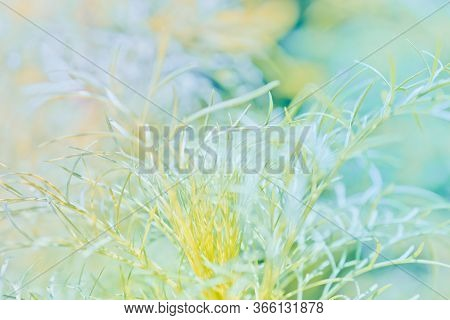 Abstract Defocused Nature Background With Green Grass And Bokeh