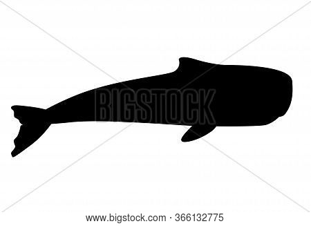 Whale. Sperm Whale Black Silhouette - Huge Animal From The Ocean - Vector Illustration For Logo Or S