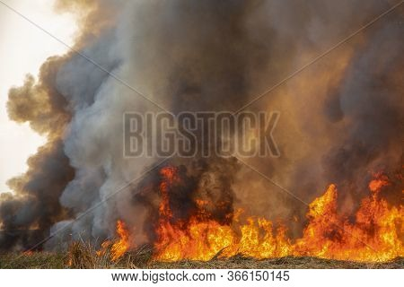 Raging Flame Of Fire Burn In Grass Fields, Forests And Black And White Smoke To Sky. Big Wildfire Cl