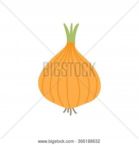 Onion Bulb Vector Illustration Icon. Yellow, White Onion Vegetable. Isolated.