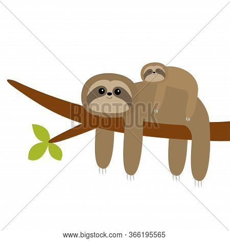 Sloth Hanging On Tree Branch Leaf. Cute Cartoon Kawaii Funny Lazy Character. Mother And Baby. Wild J