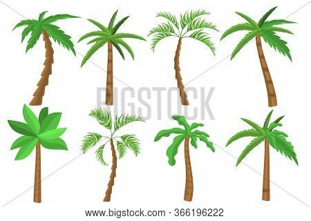 Tropical Palm Trees Set. Tropical Tree Green Leaves, Beach Palms And Retro California Greenery. Miam