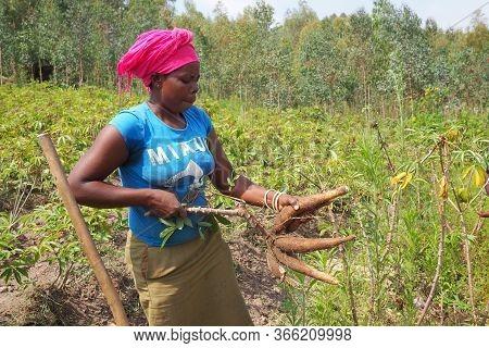 10 July 2019 - Kisumu, Rwanda : A Rural Woman Farmer In Her Fields In Rwanda.